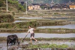 使用力量母牛,中国农夫工作在领域的土壤 免版税图库摄影