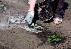 使用加工设备的木灰在庭院区域发芽 免版税库存照片