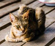 使用可视,蓝色照相机猫设备数字式作用形成不是热图象红外做的设计照片辐射实际开会热自计温度计 免版税图库摄影
