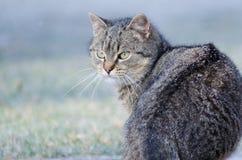 使用可视,蓝色照相机猫设备数字式作用形成不是热图象红外做的设计照片辐射实际开会热自计温度计 图库摄影