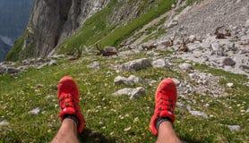 使用和放松在山的高山高地山羊在朱利安阿尔卑斯山 库存图片