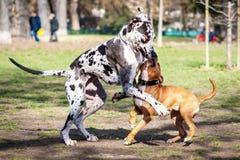 使用和跑在公园的狗 免版税库存照片