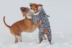 使用和跳舞在雪的狗 免版税库存图片
