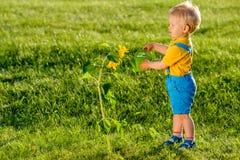 使用喷壶的一个岁男婴为向日葵 库存图片