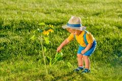 使用喷壶的一个岁男婴为向日葵 库存照片