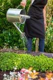 使用喷壶的妇女浇灌的花床 从事园艺的爱好概念 在葡萄酒样式的花Garden.vector花卉背景 免版税图库摄影