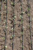 使用喷水隆头的灌溉系统在一个培养的领域 免版税库存图片