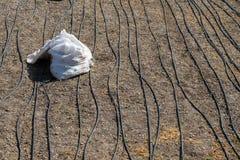 使用喷水隆头的灌溉系统在一个培养的领域 图库摄影