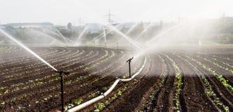 使用在一个培养的领域的喷水隆头浇灌在有灌溉系统的德国西部播种 免版税库存图片