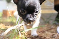 使用在一个温暖的夏天早晨的小狗 免版税库存照片