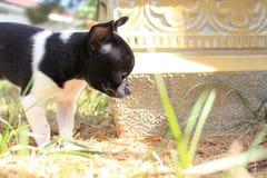 使用在一个温暖的夏天早晨的小狗 库存图片