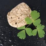 使用在一块美丽的白色石头的一个黑背景特写镜头的一片绿色叶子 免版税库存照片