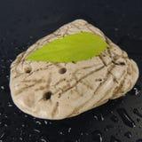 使用在一块美丽的白色石头的一个黑背景特写镜头的一片绿色叶子 免版税库存图片