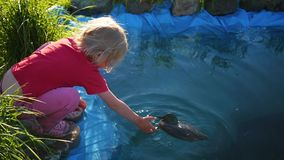 使用在公园的女孩在池塘附近 蝴蝶日草夏天晴朗的swallowtail 股票视频