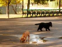 使用在公园的好奇狗 免版税图库摄影