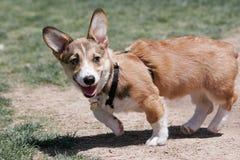 使用在公园的小狗小狗 免版税库存照片