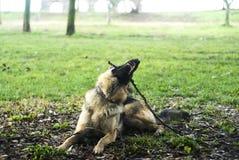使用在公园的狗 免版税库存图片