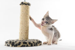 使用在刮板的小猫 免版税库存照片