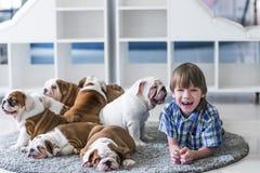 使用在地毯地板上的英国牛头犬的快乐男孩和小狗 免版税库存照片