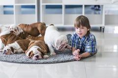 使用在地毯地板上的英国牛头犬的快乐男孩和小狗 图库摄影