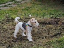 使用在地面上的甜狗狗 图库摄影