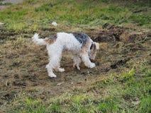 使用在地面上的甜狗狗 免版税库存照片
