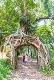 使用在塔状树的前面的孩子 免版税库存照片