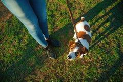 使用在妇女腿附近的逗人喜爱的狗 免版税库存图片