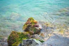 使用在岩石的两个五颜六色的螃蟹在太平洋 免版税库存图片