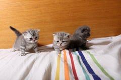 使用在床上的逗人喜爱的小小猫 免版税库存照片
