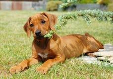 使用在庭院里的逗人喜爱的小的小狗 库存照片