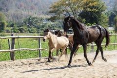 使用在槽枥的三匹马下午 库存照片