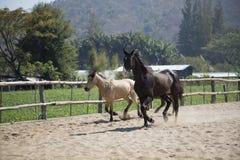 使用在槽枥的两匹马下午 库存照片