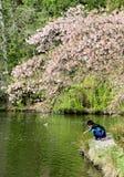 使用在樱桃树下的男孩 图库摄影