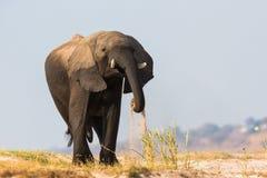 使用在沙子的大象 免版税库存照片