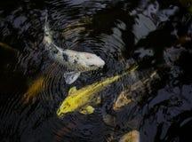 使用在波浪的小的五颜六色的鱼 免版税库存照片