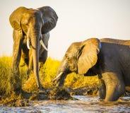 使用在泥的大象 库存图片