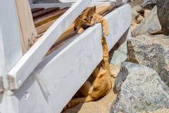 使用在海滩的夏天的两只猫 免版税图库摄影