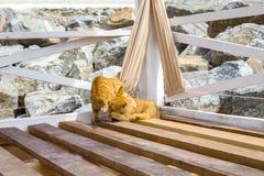 使用在海滩的夏天的两只猫 库存图片