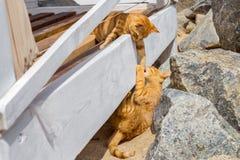 使用在海滩的夏天的两只猫 免版税库存照片