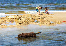 使用在海滩的狗和孩子 免版税图库摄影