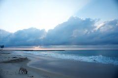 使用在海滩的狗在黎明 免版税图库摄影