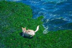 使用在海滩的狗 免版税库存照片
