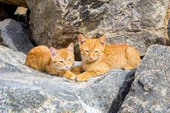 使用在石头的两只逗人喜爱的小猫 图库摄影