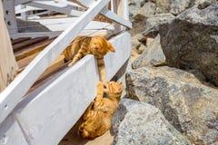 使用在石头的两只逗人喜爱的小猫 库存照片