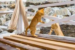 使用在石头的两只逗人喜爱的小猫 免版税库存照片