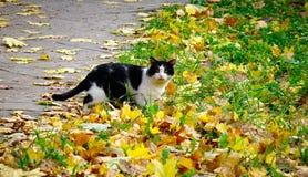 使用在秋天公园的猫 库存图片