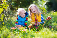 使用在秋天森林里的孩子 免版税库存照片