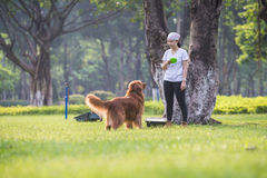 使用在草的女孩和金毛猎犬 免版税库存图片