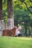 使用在草的女孩和金毛猎犬 库存图片